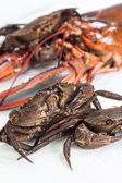 Crustacean — Stock Photo