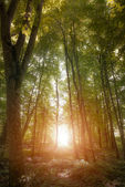 Beautiful forest along the pathway and sunshine over the trees. — Stock Photo