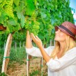 Woman plucks grapes — Stock Photo #52758235