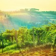 Beautiful grape valley landscape — Stock Photo #53137335