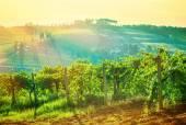Beautiful grape valley landscape — Stock Photo