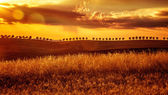 Yellow sunset over farmland — Stock Photo