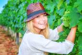 Happy girl picking grapes — Stock Photo