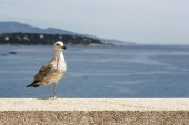 Seagull stands on the stone wall — Foto Stock