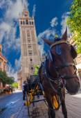 Carriage with horse next to the famous Giralda in Seville, Spain — Photo