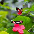 Two butterflies flit and play each — Stock Photo #61319079
