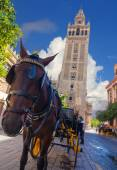 Carriage with horse next to the famous Giralda in Seville, Spain — Stock fotografie