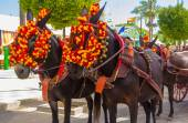 Pretty Horses with colorful ornaments participate in the famous  — Stock fotografie