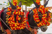 Pretty Horses with colorful ornaments participate in the famous  — Stock Photo