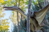 Flying Pteranodon dinosaur carnivore — Stock Photo
