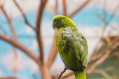 Nice colorful parrot — Stock Photo