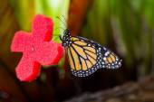 Pretty butterfly with orange and black colors — Stock Photo