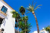 Pretty typical white houses Puerto Banus, Malaga spain — Stock Photo