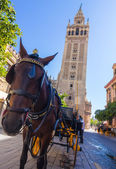 Carriage with horse next to the famous Giralda in Seville, Spain — Stock Photo