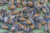 Dried abalone for sale — Stock Photo