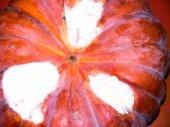 Pumpkin background. — Stock Photo