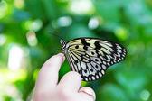 Hand finger Rice Paper butterfly Idea leuconoe — Stock Photo