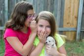 Kid girls playing with puppy pet chihuahua — Stock Photo
