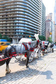Central Park horse carriage rides in New York — Stock Photo