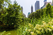 Central Park flowers Manhattan New York — Photo