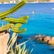 Majorca Cala Fornells beach Paguera Peguera — Stock Photo #67432301