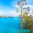 Majorca Cala Fornells beach Paguera Peguera — Stock Photo #67432513