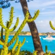 Majorca Cala Fornells beach Paguera Peguera — Stock Photo #67432927