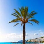 Mallorca Cala Santa Ponsa Ponca beach in Majorca — Stock Photo #67502253