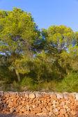 Majorca Mondrago Mondragon Natural Park pines — Stock Photo