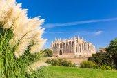 Majorca Palma Cathedral Seu Seo of Mallorca — 图库照片
