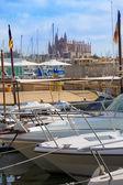 Palma de Mallorca port marina Majorca Cathedral — Stock Photo