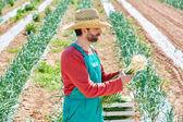 Farmer man harvesting onions in Mediterranean — Stock Photo