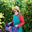Farmer man harvesting oranges in an orange tree — Stock Photo #70620929