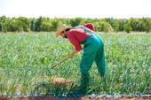 Farmer man working in onion orchard with hoe — ストック写真