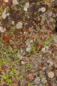 Lichen moss in limestone rock texture in Spain — Stock Photo