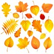 Autumn leaves — Stock Vector #52202713