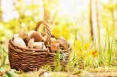 篮子里的蘑菇 — 图库照片