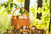 Natural background with mushrooms — 图库照片