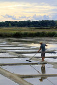 Saltern in marshes — Stock Photo