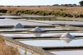Salt marshes of Noirmoutier — Stock Photo