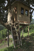 House on a tree — Stock Photo