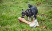 Hond en bot — Stockfoto
