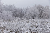 Forest covered with frost — Stock Photo