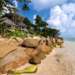 Coast, palm tree, house, stones — Stock Photo #58925257