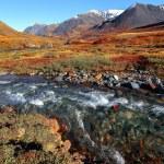 Mountain river taiga — Stock Photo #61543971