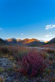 Mountain bush evening Altai — ストック写真