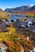 River of the mountain moss — ストック写真