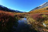 Mountains taiga lake — ストック写真