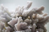 Pink, white Rhomboclase mineral — Stock Photo