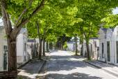 Section from the famous portuguese cemetery Prazeres — Stock Photo